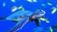 """תקציר: מידע על עולם המים של גנואה אם ילדכם ואתם חובבי ים, חיות ים וחיות בכלל, עולם המים (Aqcuario=אקווריום) של גנואה (Genova) הוא בדיוק האטרקציה בשבילכם ! 70 מיכלי מים ובהם סוגים שונים של דגים וחיות מים, ושטח תצוגה של כ 10,000 מ""""ר – עולם המים של גנואה הוא השני בגודלו באירופה.תתכוננו לביקור מהנה של כ 3 שעות !!! עולם המים (Aqcuario=אקווריום)שלגנואה (Genova)נמצא בנמל הישן של גנואה (Genova). תוכלו לערוךסיור וירטואלי (באתר של האקווריו לכו ל virtual tour בסרגל העליון): עולם המים של גנואה (Genova)מורכב ממספר אתרים ובהם אטרקציות שונות: מוזיאון הים, גן טרופי, עיר הילדים ומעלית פנורמית ממנה נשקף נוף מהמם של גנואה ומפרץ גנואה. למידע נוסף, אתר עולם המים של גנואה (Genova)(באיטלקית):http://www.acquariodigenova.it למידע אודות מחירים:http://www.acquariodigenova.it/cms/prezziorari/138-prezzi.html ביקור מהנה ! איטליה עם ילדים"""
